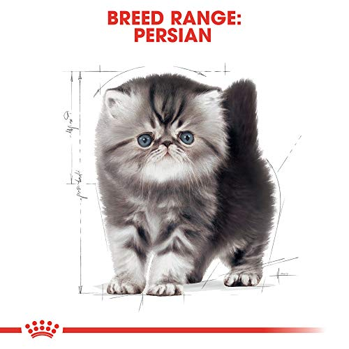 Royal Canin Feline Breed Nutrition Persian Kitten Adult Dry Cat Food, 3-Pound