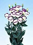 Brend Fly 200pcs/pack purple Lisianthus seeds Rare eustoma seeds Flower Seeds Bonsai Seeds for Home & Garden