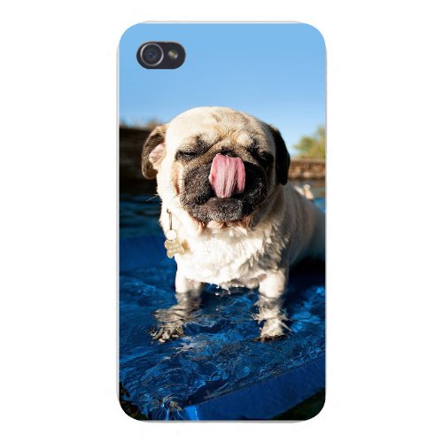 Apple Iphone Custom Case 4 4s Snap on - Cute Pug Puppy Dog Licking Nose Standing in Water