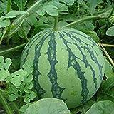 10PCS Green Watermelon Seeds Vegetable Organic Home Garden New Variety Plant