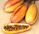 PASSIFLORA MOLLISSIMA, Banana passionfruit EDIBLE passion fruit seed 50 SEEDS