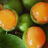 Lemon Sweet Spanish Lime Tree Seeds, 10 seeds, professional pack, green skin orange inside juicy fruits