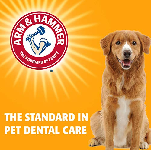 Arm & Hammer Tartar Control Dental Solutions for Dogs   Dog Toothpaste, Toothbrush, Water Additive & Dental Sprays   Vital to Your Dog's Health 6