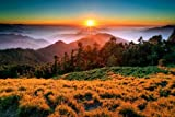 Mountain,Forest,Sunrise - Art Print Poster,Wall Decor,Home Decor(42x28inches)