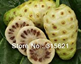 HOO PRODUCTS - 20 seeds/pack NONI Seeds Delicious Fruit seeds Morinda Citrifolia Tree Seed 5pcs Hot Sale!