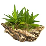 Natural Elements Log Planter (Boat) – Realistic Woodland-Themed with Intricate Weathered bark Detail + Fiber Soil + Moss Mulch. Grow Small Succulents, Cactus, African Violets. Striking in Any décor.