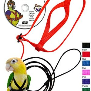 The AVIATOR Pet Bird Harness and Leash