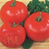 Burpee 'Super Beefsteak' | Red Beefsteak Slicing Tomato | 175 Seeds