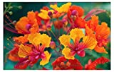 Pride of Barbados, Peacock Flower, Dwarf Poinciana, Bird of Paradise 10 Seeds