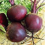 Beetroot Seeds Red Boll Heirloom Vegetable Beet Seeds
