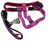 "Freedom No-Pull Dog Harness Training Package, Medium (1"" wide), Raspberry"