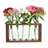 Hydroponic Flower Vases Pots in Wooden Stand Rack | 5 Glass Bottles | Vintage, Unique Decor Set for Home, Garden | Windowsill Accessory | Mother's Day, Birthday, Housewarming Parties