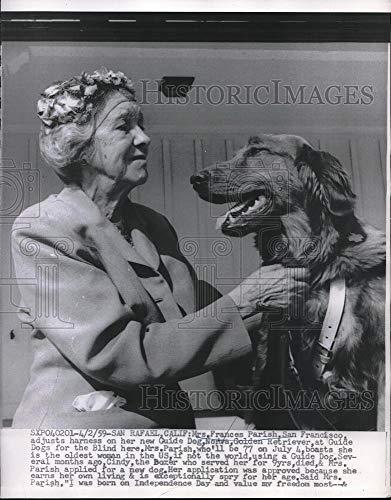 Historic Images - 1959 Vintage Press Photo Frances Parish Adjusts Harness On New Guide Dog Norva
