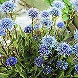 Potseed - Globularia Valentina Seeds