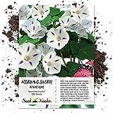 Seed Needs, Milky Way Morning Glory (Ipomoea purpurea) 100 Seeds Untreated