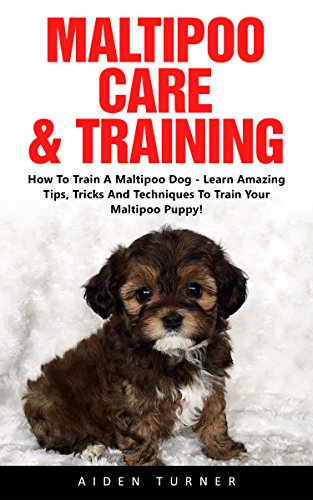 Maltipoo Care & Training: How to Train a Maltipoo Dog - Learn Amazing Tip, Tricks and Tenchiques to Train Your Maltipoo (Puppy Training, Dog Training, Dog Care)
