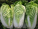 Chinese Cabbage Michelle - 400 Seeds - Organically Grown - NON-GMO