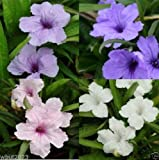 Flower seeds Potted plant seed Mexican petunias Seed- Ruellia brittoniana Seeds garden decoration plant 200pcs P55