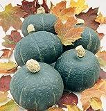 David's Garden Seeds Squash Winter Black Forest SL7686 (Green) 25 Non-GMO, Organic Seeds