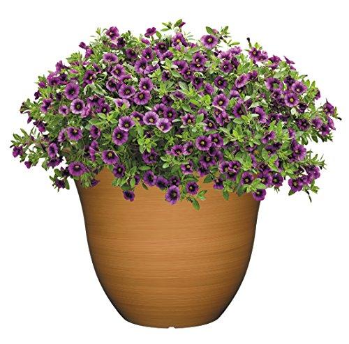 Honeysuckle-Planter-Patio-Pot