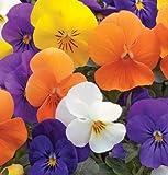 David's Garden Seeds Flower Viola Penny All Season Mix (Edible) SL1828 (Multi) 50 Non-GMO, Hybrid Seeds