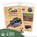 Organic Kale Seeds (APPR. 550) Red Russian Kale - Heirloom Vegetable Seeds - Certified Organic, Non-GMO, Non Hybrid - USA