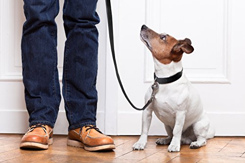 Mighty Paw Leather Dog Leash, Super Soft Distressed Leather- Premium Quality, Modern Stylish Look 7