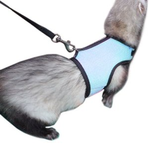 Alfie Pet – Jaylin Harness and Leash Set for Small Animals Like Guinea Pigs and Rabbits