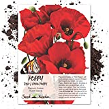 Package of 10,000 Seeds, Red Poppy Corn Poppy (Papaver rhoeas) Non-GMO Seeds By Seed Needs
