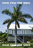 10 Royal Palm Tree Seeds