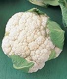 Early White Hybrid Cauliflower Seeds (52 Days) 360 Seeds Upc 646263361719 + 2 Free Plant Markers