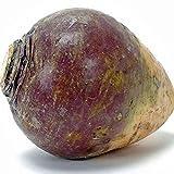 American Purple Top Rutabaga Seeds - 4.8 grams