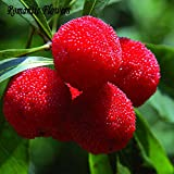 10 Particles / Bag Arbutus Unedo Strawberry Tree Delicious Chinese Fruit Seeds For Healthy And Home Garden Easy Grow