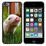 STPlus Cute Pig Animal Hard Cover Case for Apple iPod Touch 6