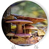 YOLIYANA Family of Mushrooms Porcelain Plates Ceramic Decorative Plates,172746,7 Inch