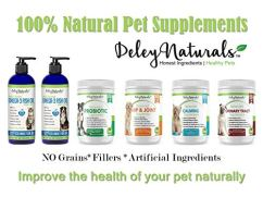 Grain-Free-Probiotics-for-Dogs-4-Billion-CFUs-6-Dig-Enzymes-Improves-Dog-Allergies-Bad-Dog-Breath-Diarrhea-Constipation-Gas-Yeast-Hot-Spots-Natural-Supplement-Made-in-USA-120-Soft-Chews