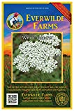 Everwilde Farms - 2000 White Yarrow Native Wildflower Seeds - Gold Vault Jumbo Seed Packet