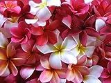 10 Frangipani MIXED PLUMERIA Rubra Lei Flower SeedsComb S/H by Seedville