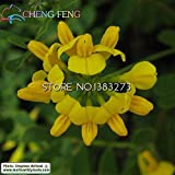 Promotion!100pcs Rare Coronilla Seeds Beautiful Flower Seeds The Budding Rate 95% Garden Plant For Kids Gift