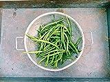 50 SLENDERETTE GREEN BEAN French Stringless Phaseolus Vulgaris Vegetable Seeds