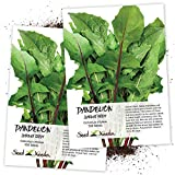 Seed Needs, Garnet Stem Dandelion (Cichorium intybus) Twin Pack of 500 Seeds Each Non-GMO