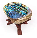 """Alternative Imagination 5""""+ Hand Selected Premium Abalone Shell with 6"""" Wooden Cobra Stand"""