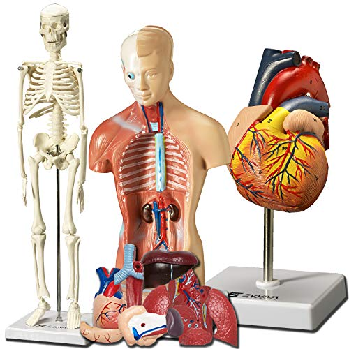 Top 10 Anatomy Doll With Removable Organs of 2020 | No ...