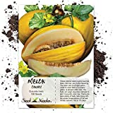 Seed Needs, Canary Melon (Cucumis melo) 100 Seeds Non-GMO
