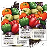 Seed Needs, Rainbow Bell Peppers (Capsicum annuum) Twin Pack of 100 Seeds Each Non-GMO