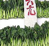 250 Choy Sum Brassica Vegetable Seed Seeds TSOI SIM Choy SIM ~ Excellent Flavor