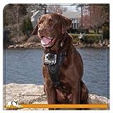 Kurgo Tru-Fit Smart Dog Harness with Camera Mount, Medium, Black
