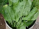 """5000 Herb-Sorrel Seeds -'Garden Sorrel - Rumex Acetosa """"Large Leaf Sorrel'"""