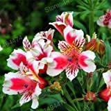 100pcs/bag mix colors Lily seeds Peruvian Lily flower seeds Alstroemeria seeds bonsai plant beautiful flower for home garden