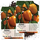 Seed Needs, Orange Scotch Bonnet Pepper (Capsicum chinense) Twin Pack of 100 Seeds Each Non-GMO